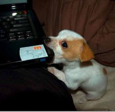 don`t eat the pc ;-))) #funny #puppy #dog ♥g♥