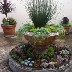 Beautiful Succulent Garden | Beautiful Succulent Fountain