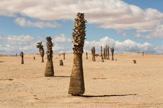 Photo by @argonautphoto (Aaron Huey). Dead palm trees near the #SaltonSea.  I love this beautiful desolation.  Shooting photos on a road trip with my 6yr old son @hawkeyehuey for the next week.  Come follow along at @argonautphoto.
