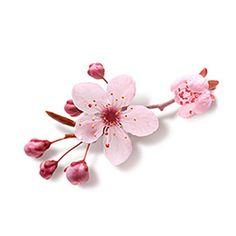 235d501380 11 mejores imágenes de tatuajes de flores japonesas