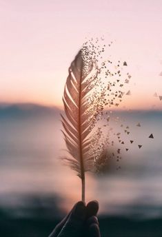 Best wallpaper backgrounds 2019 – image about love in cute photography by ocean kiss Cute Wallpaper Backgrounds, Pretty Wallpapers, Aesthetic Iphone Wallpaper, Flower Wallpaper, Aesthetic Wallpapers, Wallpaper Fur, Iphone Wallpapers, Wallpaper Ideas, Music Backgrounds