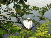 We have Swans Swans, Helsinki