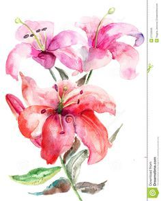 watercolor lily tattoo - Google Search