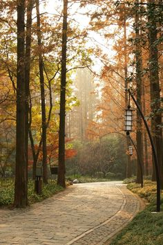 Hangzhou, China ( by Ekaterina Zhuravleva) Hangzhou, The Places Youll Go, Places To Visit, Desktop Background Pictures, Adventure Tours, China Travel, Go Outside, Nature Pictures, Beautiful Landscapes