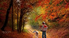 a wonderful day of autumn by costelbcc Tourism, Country Roads, Autumn, Fine Art, Vacation, Amazing, Nature, Painting, Traveling