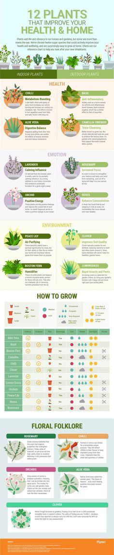 Jak pěstovat rostliny, které prospějí vašemu zdraví.