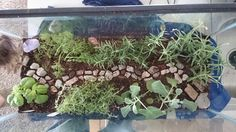 Diy fairy herb garden with a repurposed fish tank