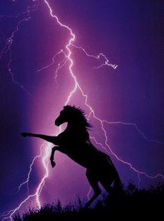 Gyönyörű csillogós lovas képek!