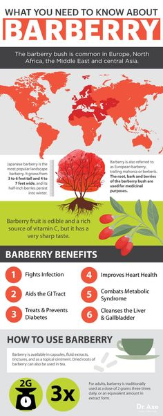 Barberry: The Heart-Healthy Herb that Cleanses Your Gut, Liver & Gallbladder - Dr. Axe