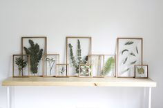 Gallery Wall, Frame, Flowers, Projects, Home Decor, Catalog, Picture Frame, Log Projects, Decoration Home