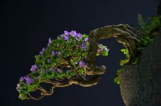 Spectacular photography, by Thang Tran.  Feel free to share! www.bonsaiempire.com #bonsai