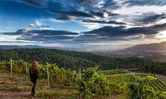 El sabor del terruño: ¿Cómo influye el suelo en el vino? https://www.vinetur.com/2014071416143/el-sabor-del-terruno-como-influye-el-suelo-en-el-vino.html