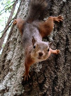 squirrel..
