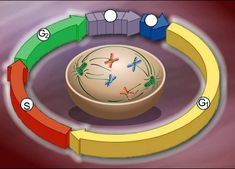 Overview of Cell Division [HD Animation] (+playlist)