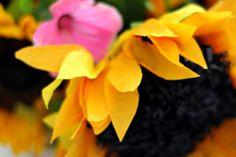 Crepe sunflower