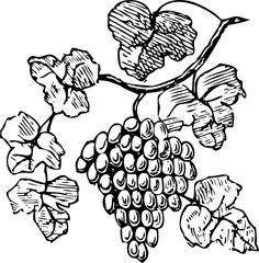 Grape Vine Clip Art Free | Grapes clip art - vector clip art online, royalty free & public domain