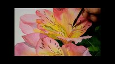 Watercolor painting - Alstremeria flower (peruvian lily) part 2