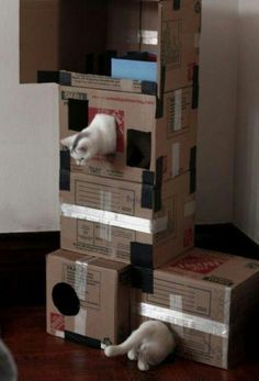 BobCat would love this:):):)