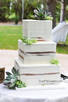 Square naked cake with succulents