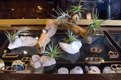 Love the mix of rock, branches, succulents    Jewelry disPLAY // Blydesign blog