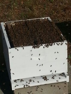 Hives are full