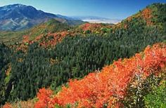 Nebo Loop Scenic Byway in the fall take the Loafer Mountain Hiking Trail to see all the fall beauty!