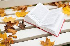 Stock fotó: Nyitott · könyv · pad · ősz · park · évszak · oktatás