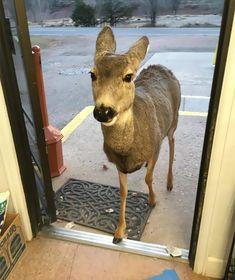 Door Is Open — ayellowbirds:   archiemcphee:   On Surreal Sunday...