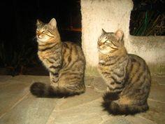 Cats+by+ventrix24.deviantart.com+on+@DeviantArt