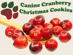 This holiday dog treat recipe nurtures the bladder and urinary tract, improves digestion, supports the immune system, and offers a complete mineral boost.