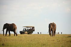 If you are planning to take a safari to Africa, you can't go wrong if you choose to take one of the #KenyaSafaris. Know more @ http://kenya-safaris.co/