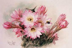 Cactus Flower  Cross stitch pattern pdf format by diana70 on Etsy