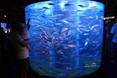 round fish aquariums - Google Search