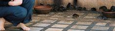 mis pies en Karni Mata: el Templo de las Ratas, en Deshnoke