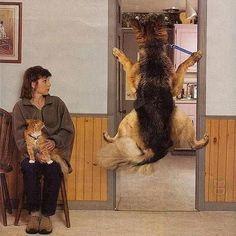 Qualcuno oppone resistenza!   TERRORE ... dal veterinario