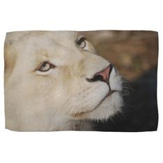 A gentle lion kitchen towel Mountain Lion, Kitchen Towels, Hand Towels, Animal Kingdom, Lions, Animals, Kitchen Tablecloths, Animales, Lion