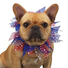 Aria Sheer Ribbon Patriotic Dog Scrunchies, Small - http://www.thepuppy.org/aria-sheer-ribbon-patriotic-dog-scrunchies-small/