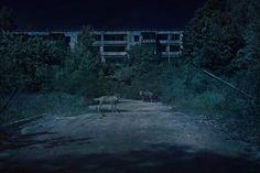 Chernobyl by Adam Orzechowski