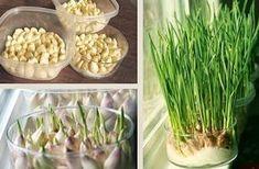 Que tal plantar em casa, ou no seu apartamento batata doce, alho, alface, cenoura?! É possível sim! Achei a ideia tão incrível que já ...