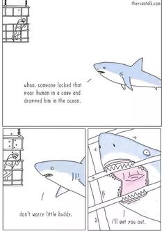 thats probly what sharks think 95% of the time. tbh i actually believe that's what they might think. animals aren't always as they seem