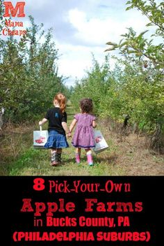 8 Pick-Your-Own Apple Farms in Bucks County, PA (Philadelphia Suburbs)