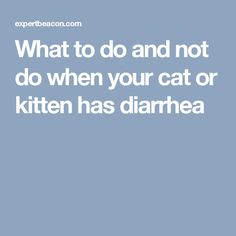 What to do and not do when your cat or kitten has diarrhea