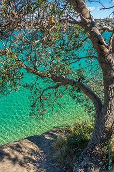Middle Harbour - New South Wales Australia.   #sydney #nsw #newsouthwales #australia #beach #middleharbour #harbour #sea #tree #transparency #summer #paradise #art #fineart #photography #nature #decoracao #decoration #designdeinteriores #interiordesign #mmorenofoto