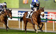 Cladocera (GER) 2011 B.m. (Oasis Dream (GB)-Caesarine (FR) by Pivotal (GB) 1st Cape Verdi S (UAE-G2,1800mT,Meydan), Balanchine S (UAE-G2,1800mT,Meydan) (photo: Dubai Racing Club/Andrew Watkins)