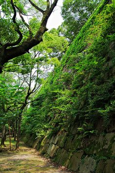 Ivy Covered Wall , Osaca Castle. Japan.