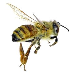 The Dangers of Neonicotinoid Pesticides - Nature and Environment - MOTHER EARTH NEWS