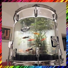 I would love to have this Drum Fish Tank! This would be amazing in my music room! Marching Band Shirts, Drummer Gifts, Music Decor, Music Gifts, Music Lovers, Fish Tank, Drums, Concert, Geek