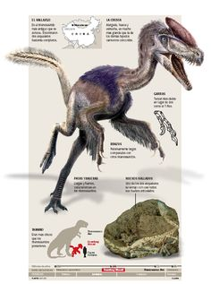 Species New to Science: [Paleontology • 2006] Guanlong wucaii 'crown dragon' • A proceratosaurid tyrannosauroid dinosaur from the Late Jurassic of China