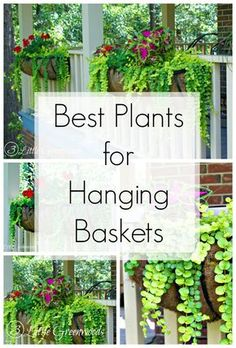 MUST PIN post for awesome curb appeal! Best flower box ideas into instant WOW! DIY flower baskets that you can make this weekend! // 3 Little Greenwoods