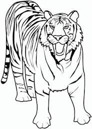 Growling Tiger color page. Animal coloring pages. Coloring pages for kids. Thousands of free printable coloring pages for kids! Zoo Animal Coloring Pages, Shark Coloring Pages, Coloring Pages To Print, Coloring Book Pages, Coloring Pages For Kids, Kids Printable Coloring Pages, Printable Animals, Free Printable, Tiger Drawing For Kids
